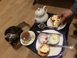 Cats and cream tea
