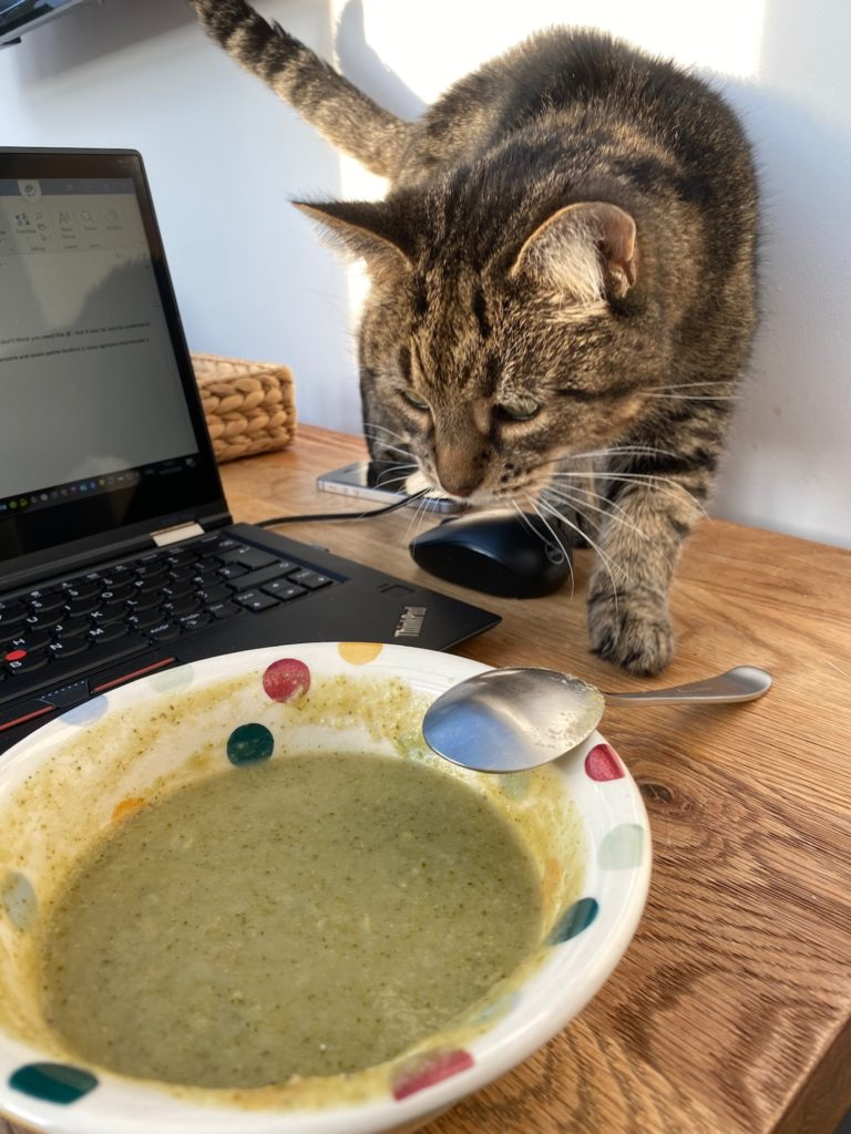 Betty the cat trying to eat broccoli soup
