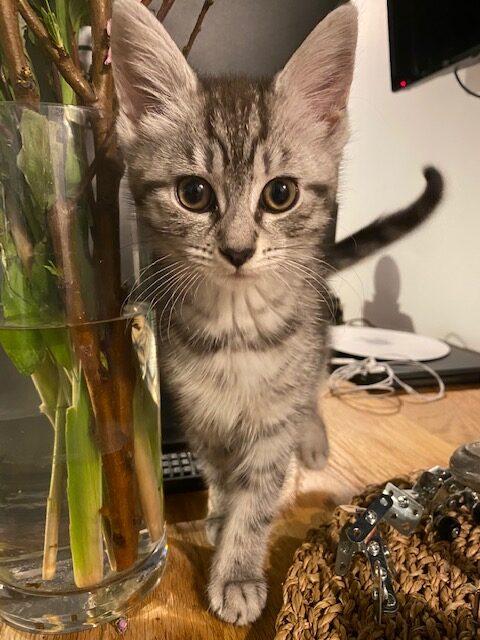Star the kitten