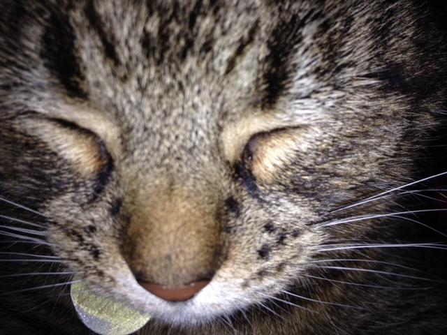 Betty sleeping close up